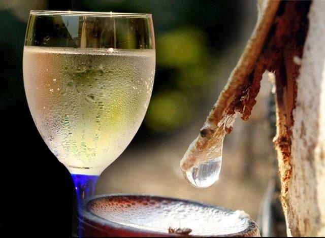 Как сделать домашнее вино из березового сока?