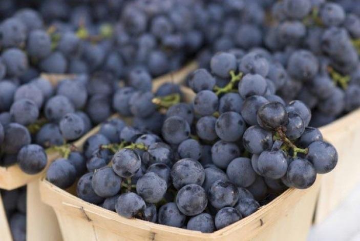 Виноградная наливка из изабеллы